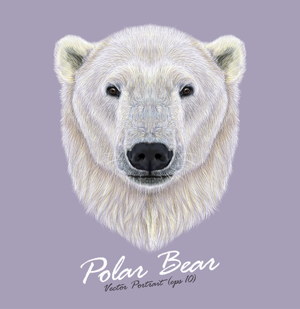 Vector Illustrated Portrait of Polar Bear on violet background. . The largest and most northern bear. Иллюстрация