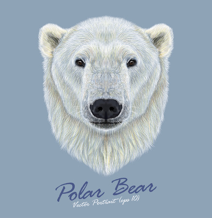 Vector Illustrated Portrait of Polar Bear on blue background. The largest and most northern bear. Vectores