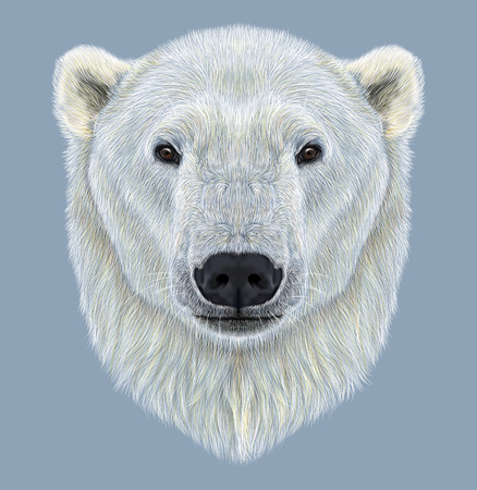 largest: Illustrated Portrait of Polar Bear on blue background. The largest and most northern bear. Stock Photo