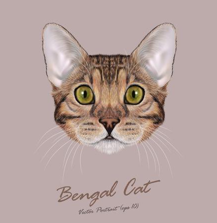 gato dibujo: Cara linda de Brown-gato manchado doméstico con los ojos azules
