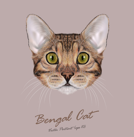 cat: Cute face of Brown-spotted Domestic cat with blue eyes Illustration