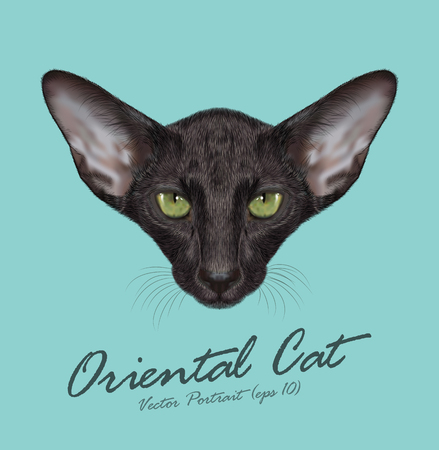 Black Domestic purebred Cat with green eyes Ilustração