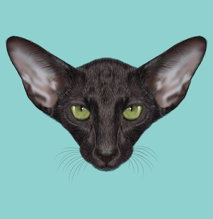 Black Domestic purebred Cat with green eyes Imagens