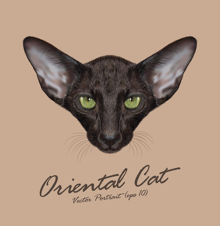 siamese cat: Black Domestic purebred Cat with green eyes Illustration