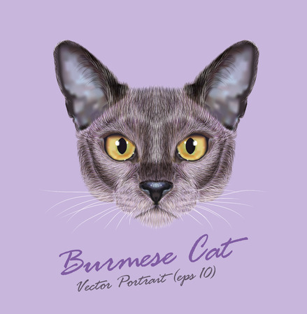 Cute face of blue color Domestic Cat with yellow eyes on violet background Vectores