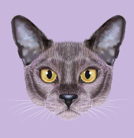 sable: Cute face of blue color Domestic Cat with yellow eyes on violet background Stock Photo
