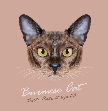 sable: Cute face of sable color Domestic Cat with yellow eyes on natural background Illustration