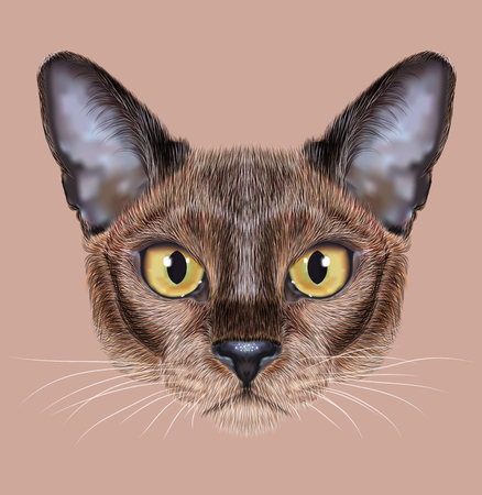 sable: Cute face of sable color Domestic Cat with yellow eyes on natural background Stock Photo