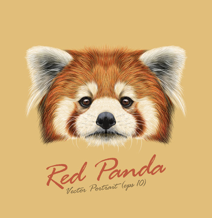 Cute face of Red Panda on natural background