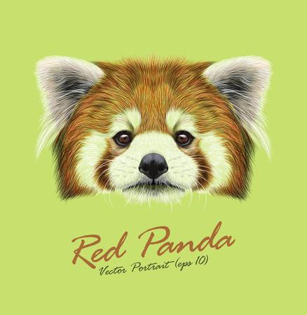 oso panda: Cara linda de la panda roja sobre fondo greenl