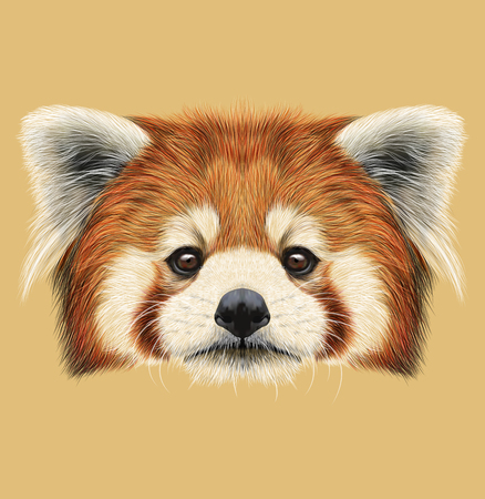 oso panda: Cara linda de la panda roja en fondo natural