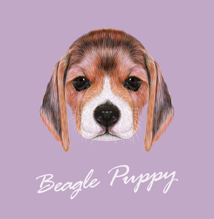Cute Face of Beagle Puppy on violet background