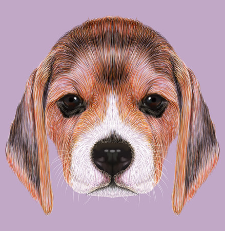 Cute Face of Beagle Puppy on tan background