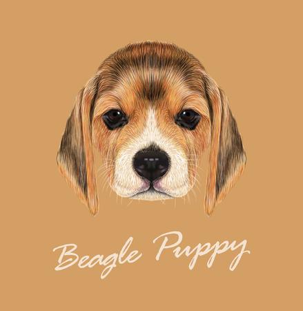 Nettes Gesicht des Beagle-Welpen auf tan Hintergrund Standard-Bild - 49164926