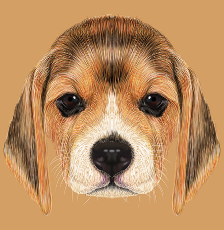 beagle puppy: Cute Face of Beagle Puppy on tan background