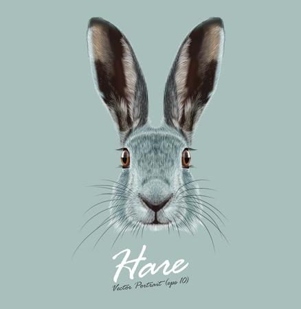liebre: Cara linda de Wild Hare sobre fondo azul