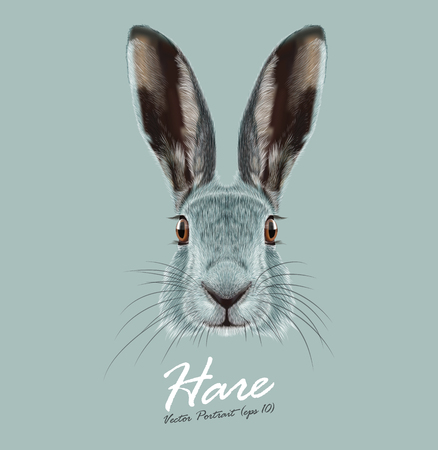 animal nose: Cute Face of Wild Hare on blue background