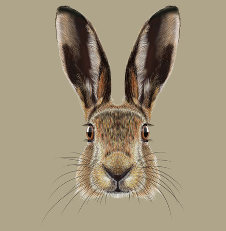 Schattig gezicht van Wild Hare op natuurlijke achtergrond