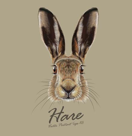 liebre: Cara linda de Wild Hare en fondo natural Vectores