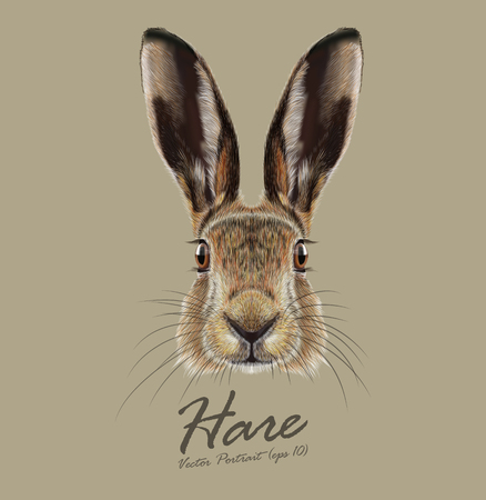 Cute Face of Wild Hare on natural background Ilustração