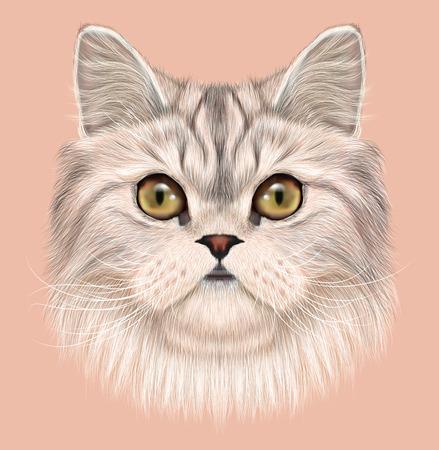 Cara linda del gato doméstico en el fondo de color rosa Foto de archivo - 49166257