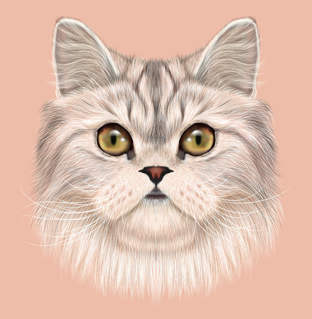 grey cat: Cute Face of Domestic cat on pink background Stock Photo