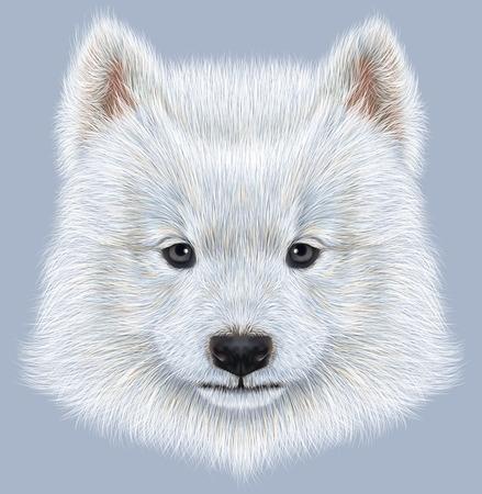 siberian samoyed: Cute face of Samoyed Puppy on blue background