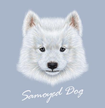 samoyed: Cute face of Samoyed Puppy on blue background