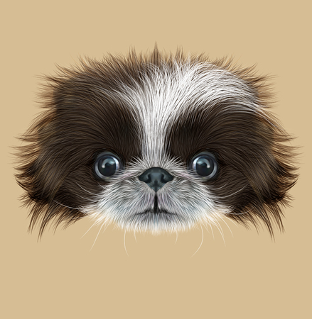 chihuahua: Cute face of bicolor Domestic Puppy on tan background
