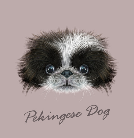 pug nose: Cute face of bicolor Domestic Puppy on grey background