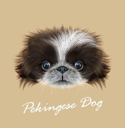 pekingese: Cute face of bicolor Domestic Puppy on tan background