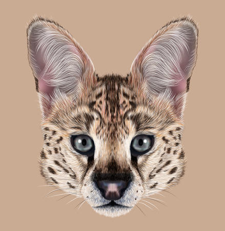 Cute face of African wild cat on tan background.