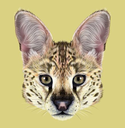 Cute face of African wild cat on yellow background. Stock Photo