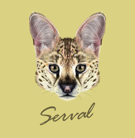 yellow african: Cute face of African wild cat on yellow background. Illustration