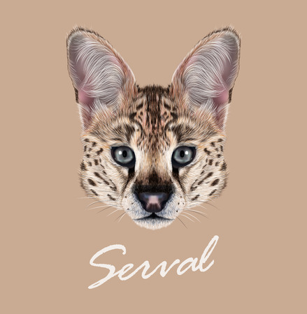undomesticated: Cute face of African wild cat on tan background.