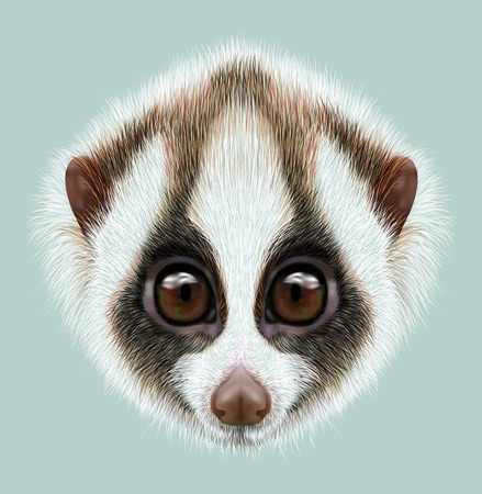 Very cute face of Slow loris on blue background. 스톡 콘텐츠