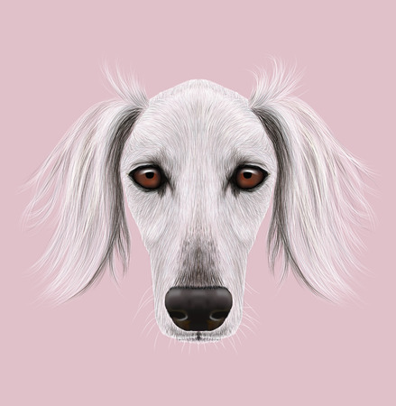 purebred: Cute face of purebred domestic dog on pink background