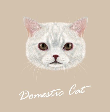 grey cat: Cute face of white cat with delicate grey stripes Illustration