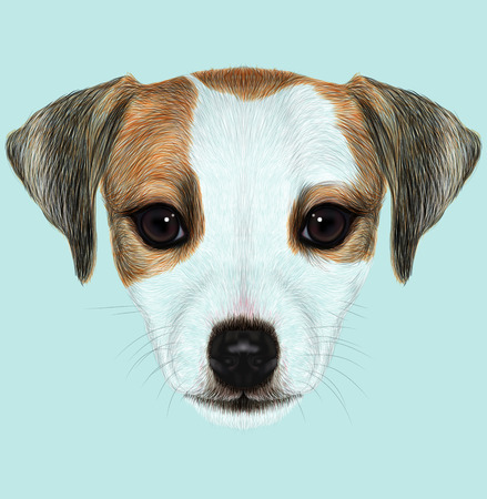 jack russel: Cute face of domestic dog on blue background. Stock Photo
