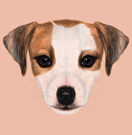 jack russel: Cute face of domestic dog on pink background.
