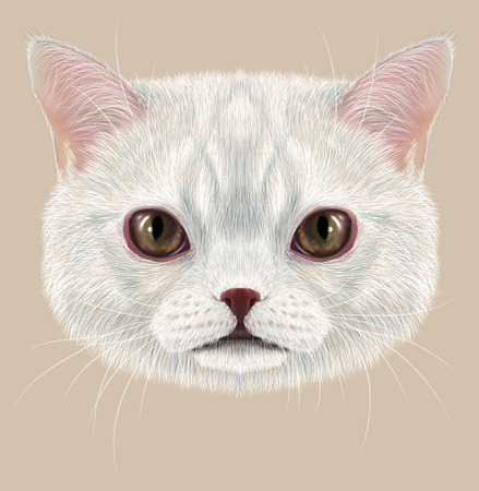 grey cat: Cute face of white cat with delicate grey stripes Stock Photo