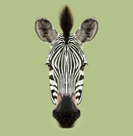 Hoofd van wild paard van Afrika op groene achtergrond. Stockfoto