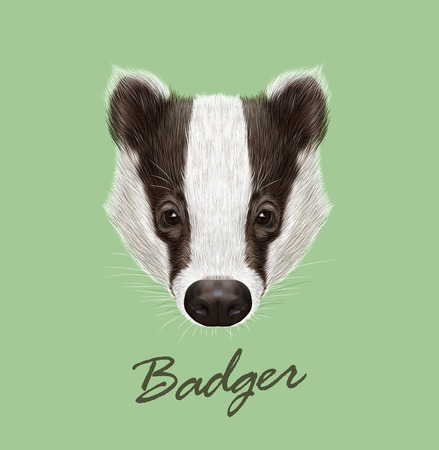 badger: Vector Illustrated Portrait of Badger. Wild forest animal. Cute black and white face on green background. Illustration
