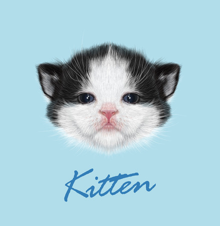 Vector Illustrated Portrait of Domestic Kitten. Cute face of bicolor cat on blue background. Illustration