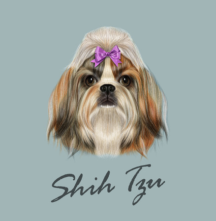 Vector Illustrated Portrait of Shih Tzu Dog. Domestic toy dog breed. Tricolor dog with pink bow.