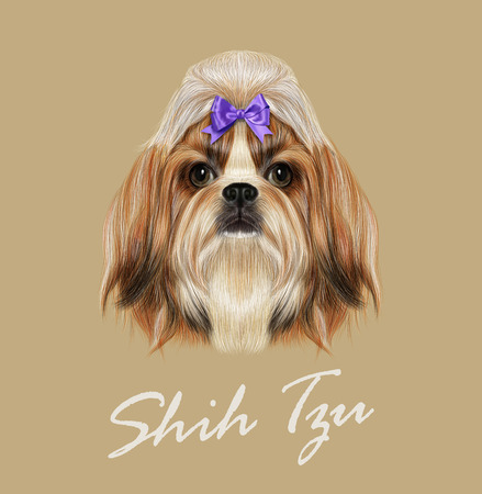 Vector Illustrated Portrait of Shih Tzu Dog. Domestic toy dog breed. Tricolor dog with violet bow. Illustration