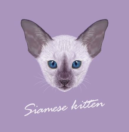 siamese: Vector Illustrated Portrait of Kitten. Siamese Kitten. Lilac point with blue eyes on violet background.