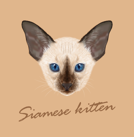 siamese: Vector Illustrated Portrait of Kitten. Siamese Kitten. Chocolate point cat with blue eyes on tan background. Illustration