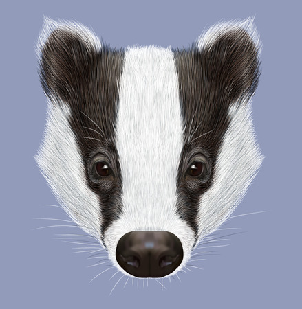 badger: Illustrated Portrait of Badger. Wild forest animal. Cute black and white face on blue background.