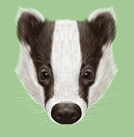 badger: Illustrated Portrait of Badger. Wild forest animal. Cute black and white face on green background.